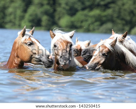 Batch of nice chestnut horses swimming in the water - stock photo