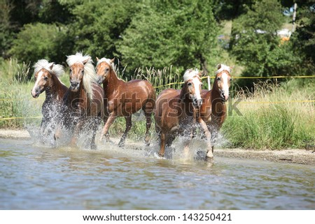 Batch of young chestnut horses running in the water - stock photo