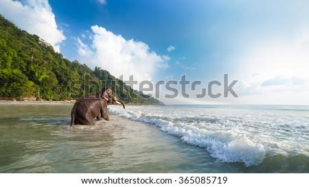 Bathing elephant on the tropical beach background. Havelock island, India. - stock photo