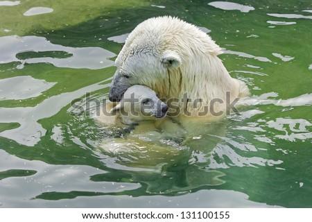 Bathing polar bears - stock photo