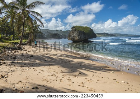 BATHSHEBA, BARBADOS - DECEMBER 08, 2013 : Man walking down the beach at Bathsheba on the Atlantic east coast of the Caribbean island of Barbados in the West Indies.