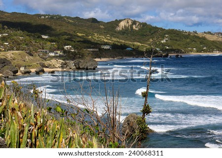 Bathsheba bay, Barbados, is everyone's dream of the perfect tropical beach - cliffs, coconut palms, a cave, white sand, brisk breezes and Turquoise Sea - stock photo