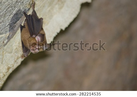 Bats are sleeping in the cave hanging on the ceiling period midday - stock photo