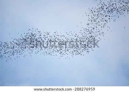 Bats flying in gunung mulu national park - stock photo