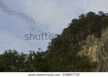 Bats leaving Deer Cave in search for food, Mulu national park, Borneo - stock photo