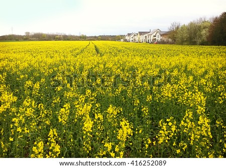 Bavaria - springtime, country landscape, houses among fields of bright yellow canola flowers