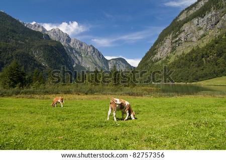 Bavarian Alps, Germany, Europe - stock photo