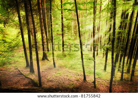 Bavarian forest - stock photo