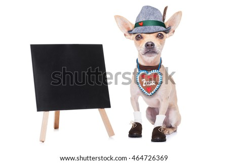 bavarian german chihuahua  dog with  gingerbread ,  isolated on white background , ready for the beer celebration festival in munich, blackboard or placard to the side
