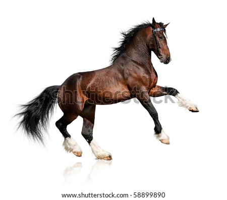 Bay big horse isolated on white background - stock photo