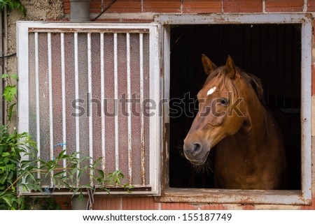 Bay, Brown horse at the window - stock photo