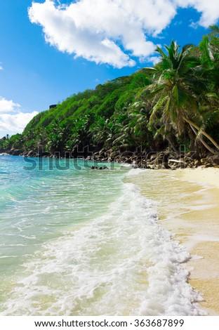 Bay Dream Palms  - stock photo