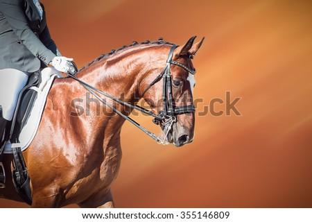 Bay horse: dressage - equestrian sport - stock photo