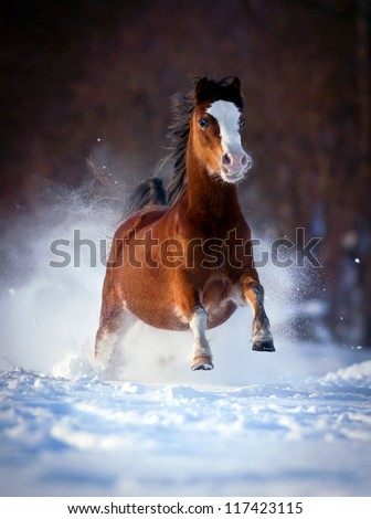 Bay horse galloping in winter forest - stock photo