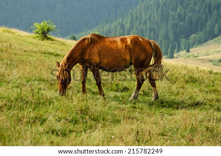 Bay horse grazes in the mountains at sunset, natural background - stock photo