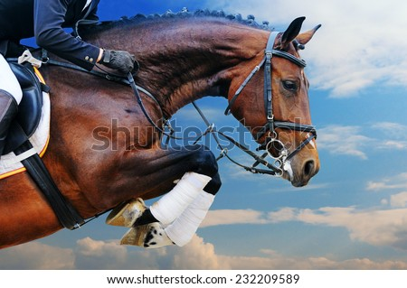 Bay horse in jumping show against blue sky