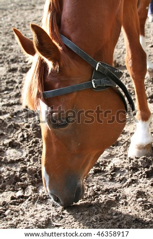 Bay horse in the corral - stock photo