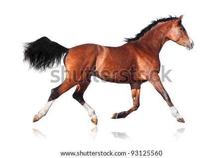 Bay horse isolated on white background - stock photo