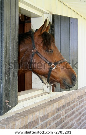 Bay horse looking out of stall