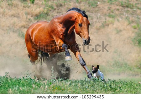 Bay horse playing with dog - stock photo