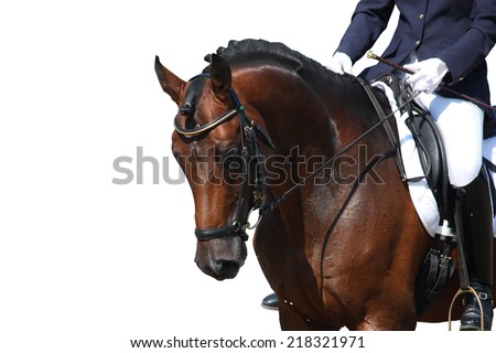 Bay horse portrait during dressage competition isolated on white - stock photo