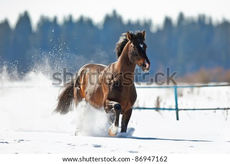 Bay horse running in winter - stock photo