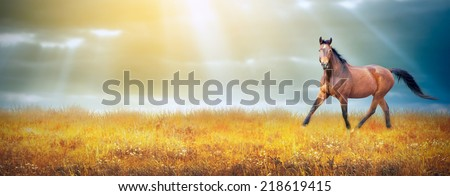 Bay horse running trot on autumn field on sky background with sun rays, banner - stock photo