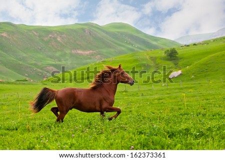 bay horse skips on a green meadow against mountains - stock photo