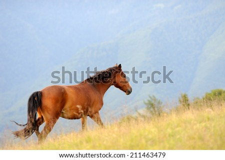 Bay horse skips on a green meadow against mountains