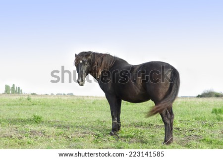 Bay horse standing in a field. - stock photo