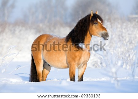 Bay horse standing in snow at winter