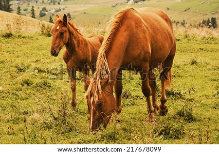 Bay horse with foal grazes in the mountains at sunset, natural background - stock photo