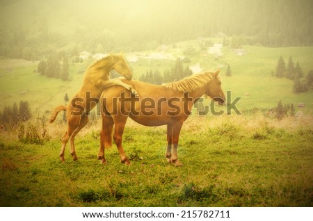 Bay horse with foal playing in the mountains at sunset, amazing hipster natural background
