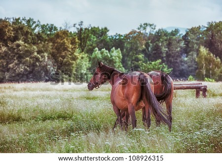 Bay horses in a meadow