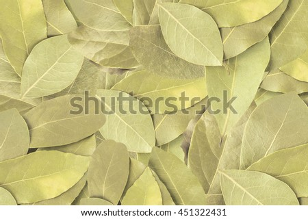 Bay leaf for background. Spices for flavoring foods. Top view. - stock photo