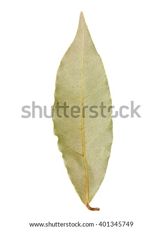 Bay leaf isolated on white background clipping path
