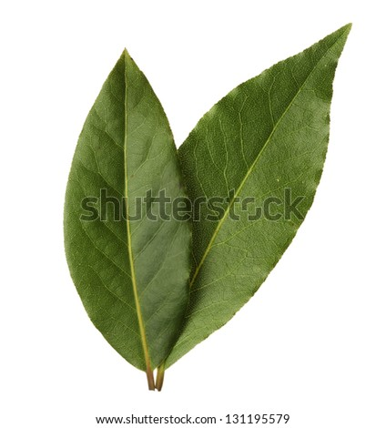 Bay leaves isolated on white background - stock photo