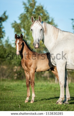 Bay mare with foal standing on the pasture
