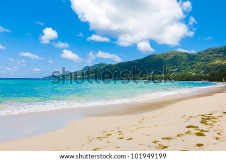 Bay Palms Jungle - stock photo