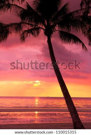 Bay View Palm Paradise - stock photo