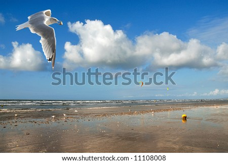 Beach and seagull