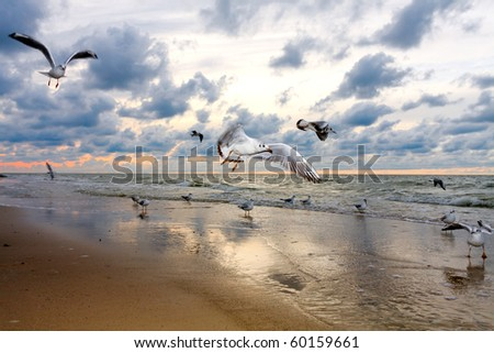 Beach and seagulls in sunset - stock photo