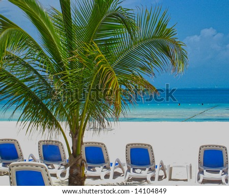 beach chairs and palm tree