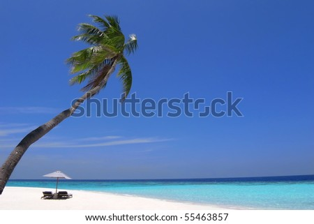 Beach chairs under a palm tree on a deserted stretch of pristine beach - stock photo