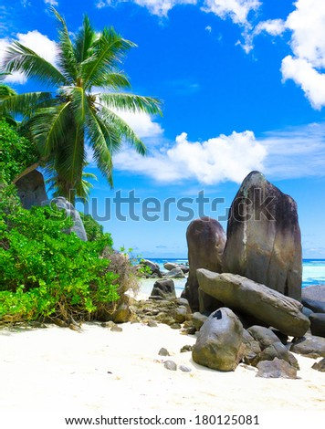 Beach Coconut Summer  - stock photo