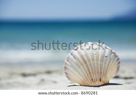 Beach concept. Sea shell with ocean on background. - stock photo