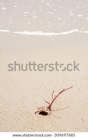 beach coral sand nature shell