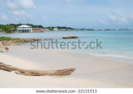 Beach & drift wood;  Utila, Bay Islands, Honduras