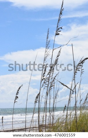 Beach Dune Wispy Grass with Ocean and Blue Sky Backdrop