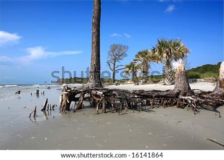beach erosion - stock photo